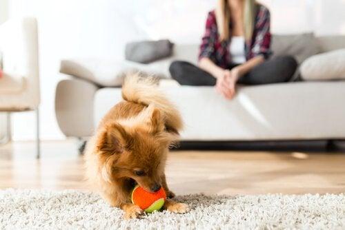 Grundläggande aspekter av hundars beteende