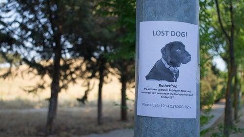 Affisch om försvunnen hund