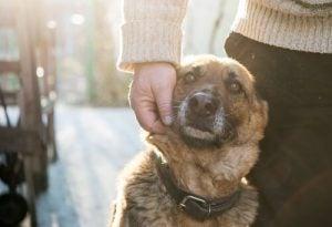 till världens ände - kärleken till en hund