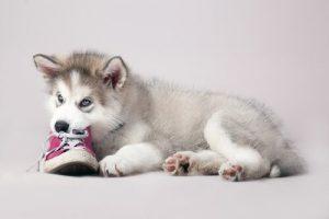 om bitande: hindra hundar från att bitas