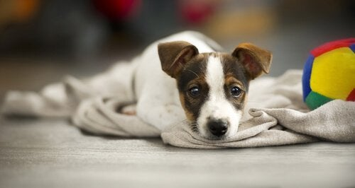 Hur man avgör om en hund signalerar missnöje