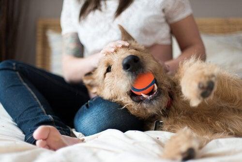 Hund med boll i munnen.