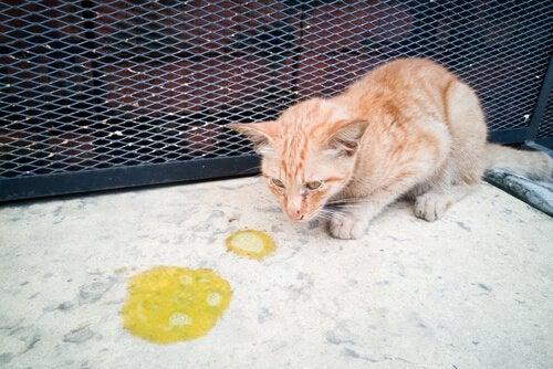 Katt som kastar upp mat.
