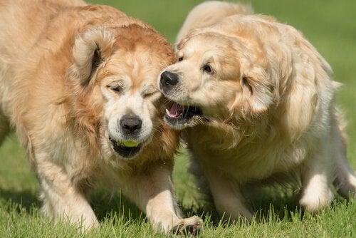 Hur kan du hindra din hund från att bitas?