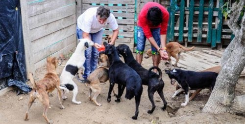 Djurräddningsorganisation vräks från sitt härbärge