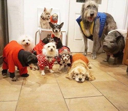 En man räddar tio hundar och grisar via adoption