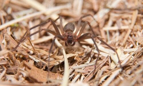 Brun spindel på marken.