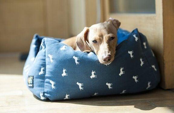 Sex passande platser för din hunds säng