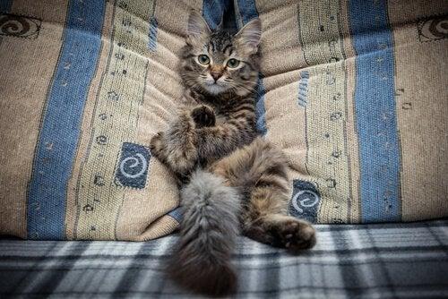 Hindra din katt från att hoppa upp i soffan