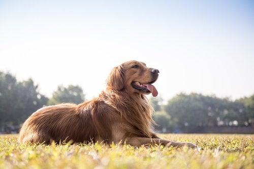 Hur man vet om hunden är frisk baserat på avföringen