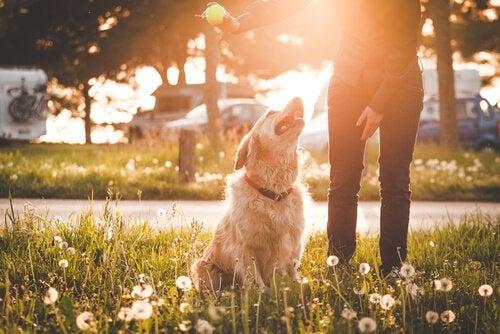 Hund som tittar mot sin ägare.