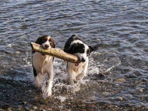 Vilken är den idealiska partnern för din hund?