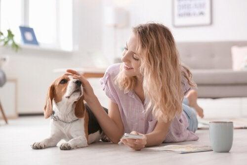 Kvinna klappar beagle