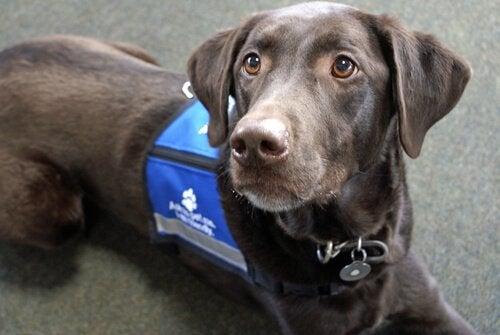 5 jobb för hundar – sysslor för flitiga jyckar