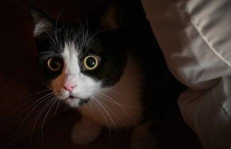 Rädd katt stirrar