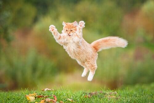 Vad är det som gör din katt lycklig och nöjd?