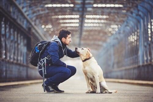 Hundvänliga tips: 5 destinationer i USA att åka till med hunden