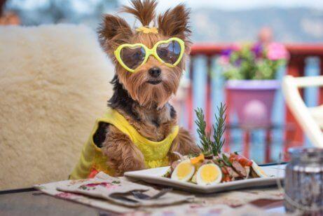 Hund äter sallad