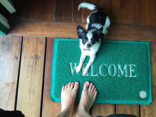 Har du hundar som hoppar upp på folk?