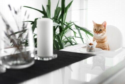 Katt vid matbordet