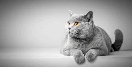 Katternas kroppsspråk: hur du tolkar din vän