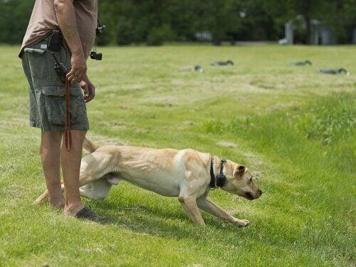 Labrador med sin ägare.
