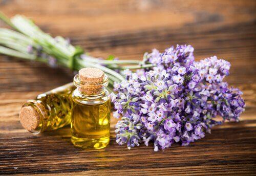 Olja och lavendel