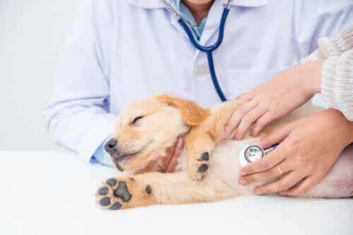Hur är en veterinärundersökning för ditt djur?