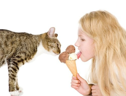 Katt äter glass