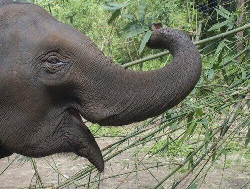 Intressanta och häpnadsväckande fakta om elefanter