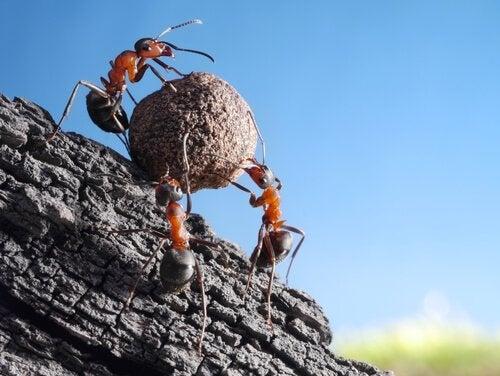 Fascinerande och intressanta fakta om myror