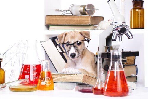 Vad finns det för olika intelligenstest för djur?