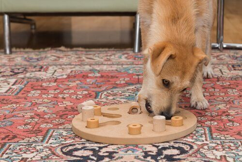 Hund som leker med pussel.