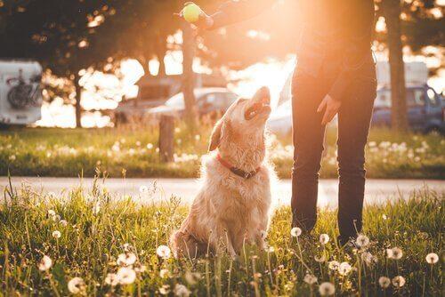 Hund som tittar upp mot ägare.