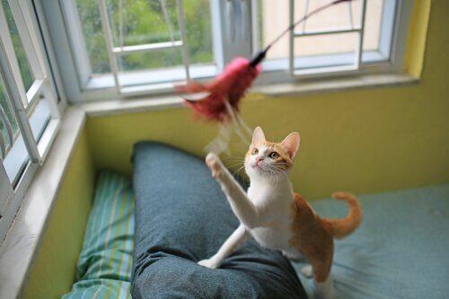 Katt som försöker fånga en leksak.