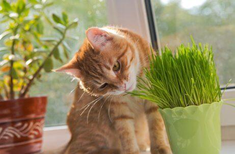 Katt som luktar på växt.