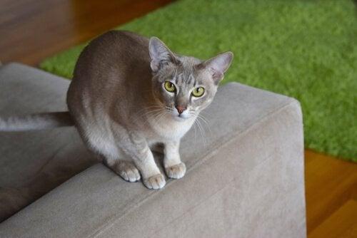 Katt som sitter på soffan.