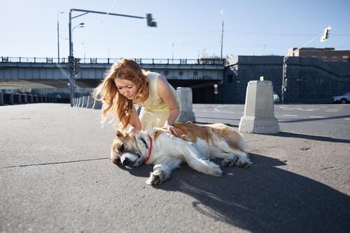 Kvinna som tar hand om sin hund.