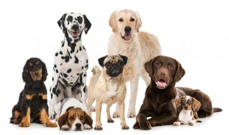 Olika hundar i grupp.