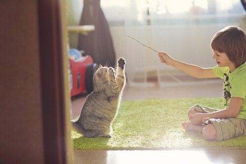 Finurliga och roliga tips för att leka med din katt