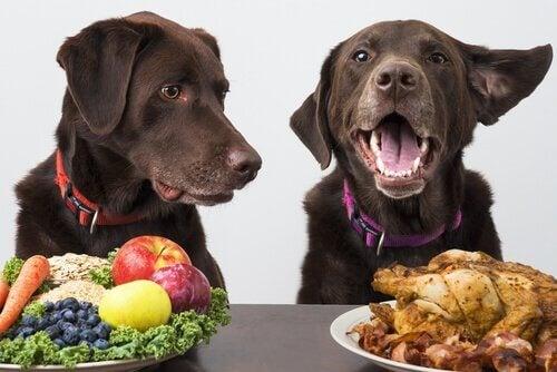 Veganhundar: kan hundar vara veganer?