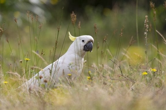 En fågel i naturen