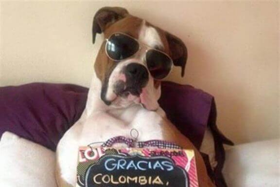 Hunden Oscar och hans inspirerande berättelse