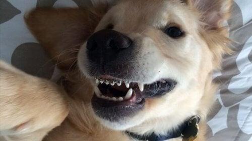 Tandställning för hundar? Ja, det finns faktiskt!