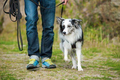 Hund som går med ägare.