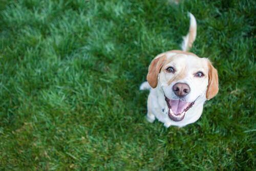 4 hälsosamma vanor för hundars hjärtan
