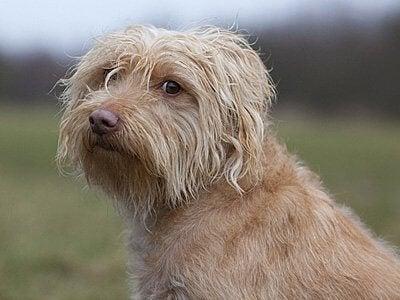 En medelstor hund