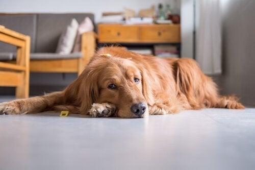 Ditt husdjurs stillasittande livsstil kan leda till problem