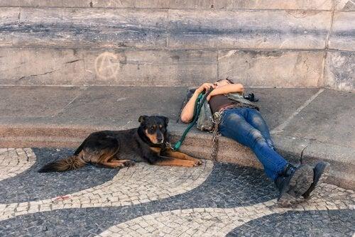 5 vackra europeiska resmål att ta med hunden till