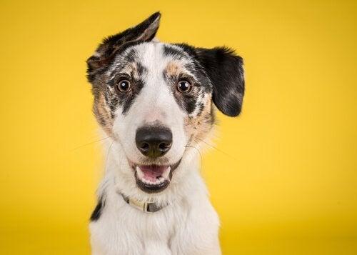 Glad hund med gult band.